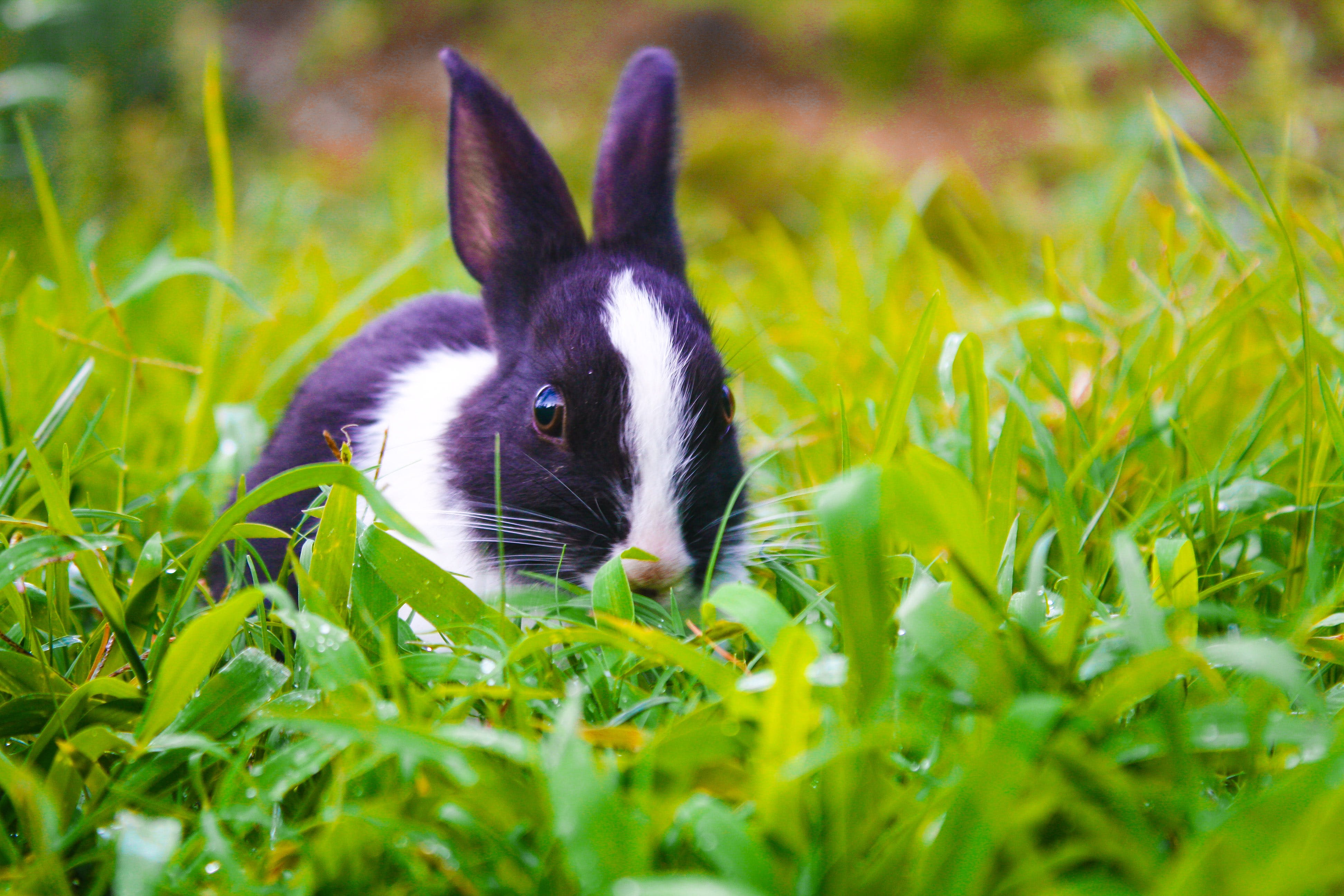 Free stock photo of #wildlife, animal park, animal photography, beautiful view
