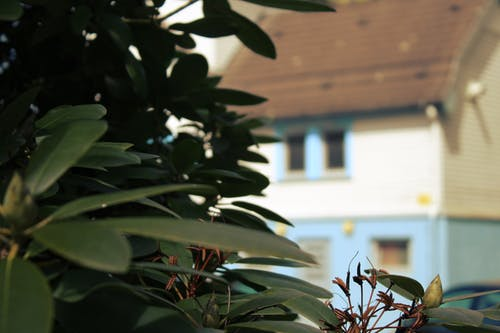 Kostenloses Stock Foto zu bauernhaus, naturfotografie, stadtpark