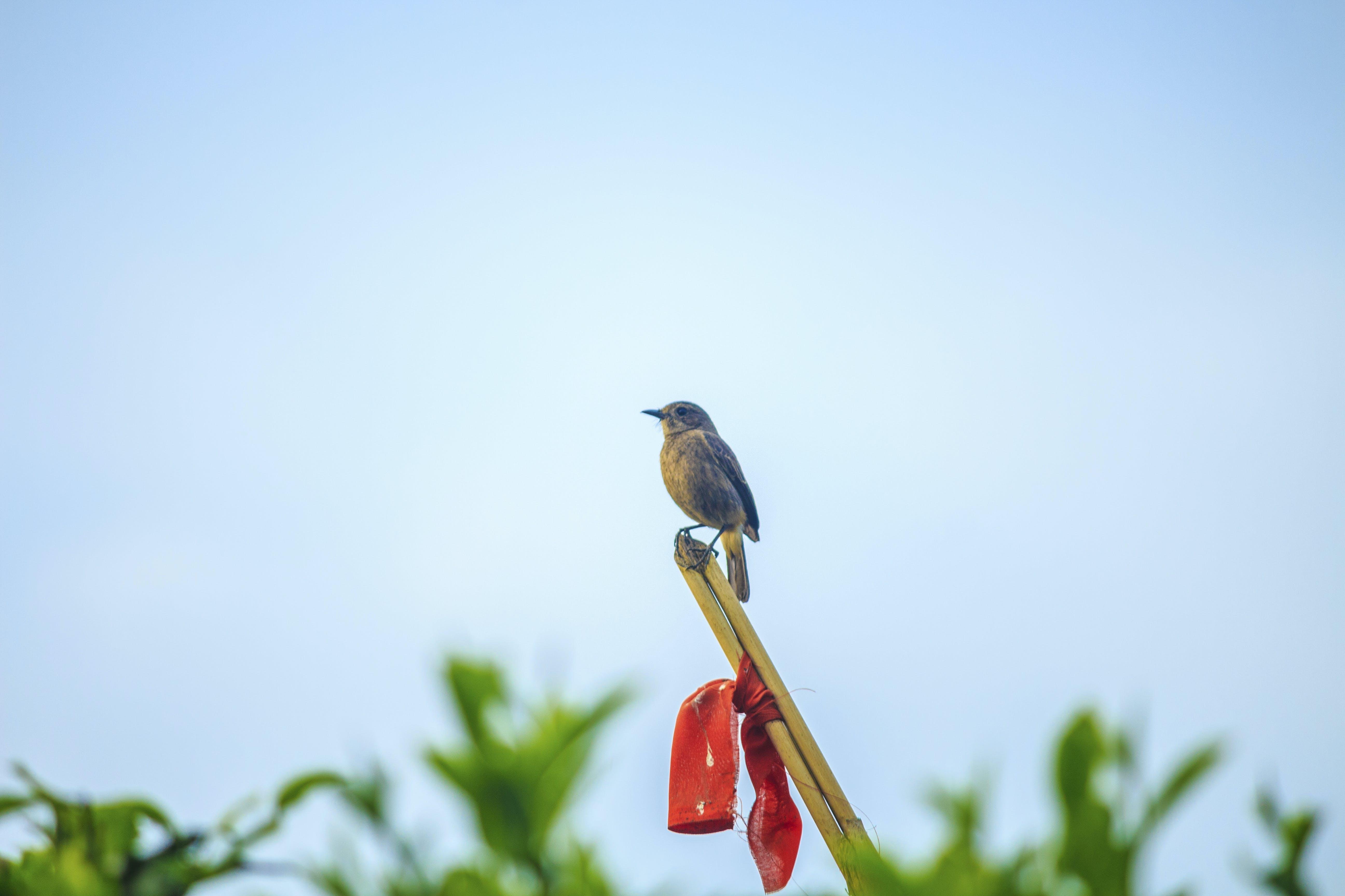Free stock photo of bird, nature, small bird, tiny bird