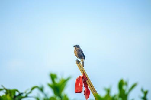 Ilmainen kuvapankkikuva tunnisteilla luonto, pieni lintu