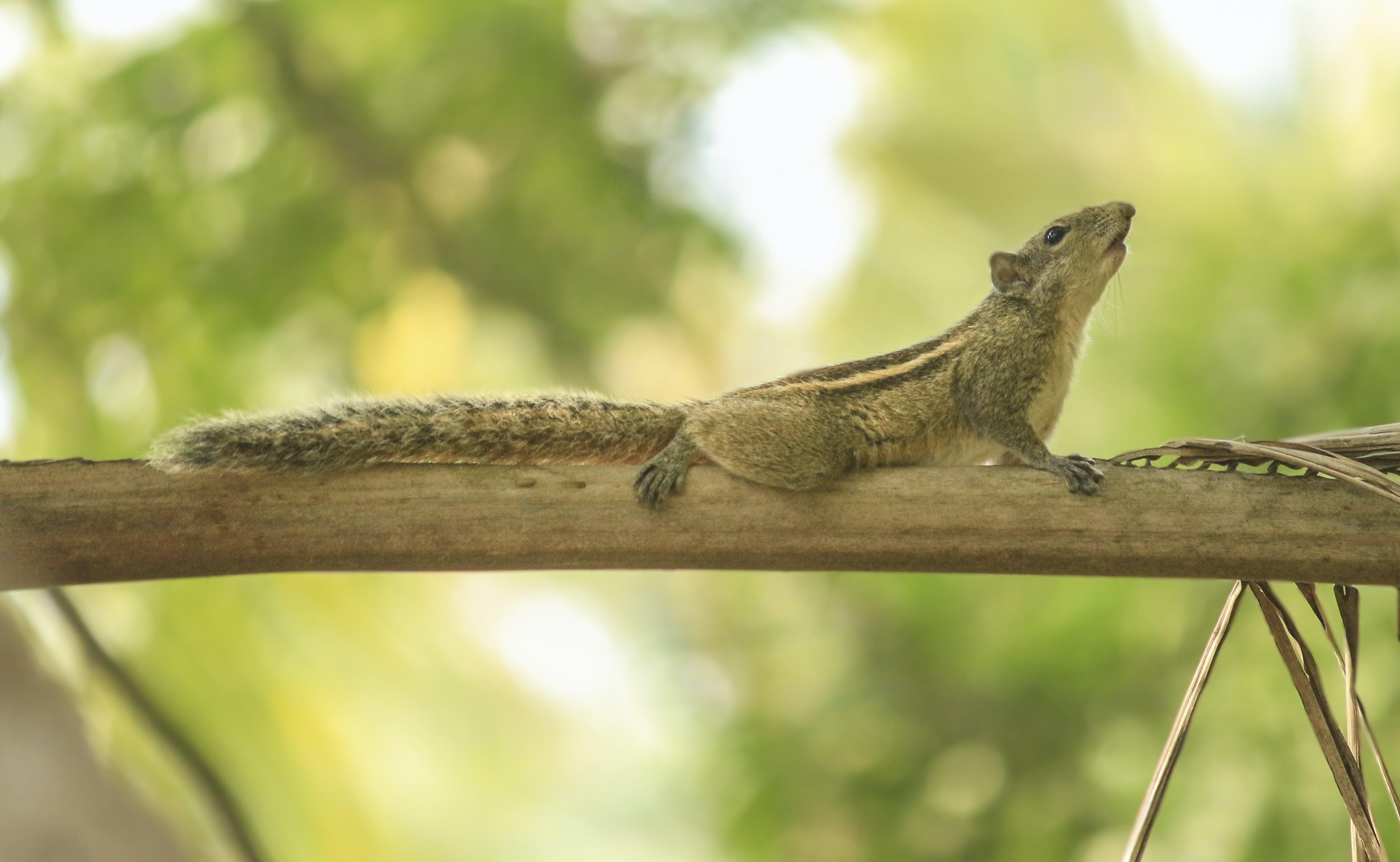 Photo of Chipmunk on Tree Branch