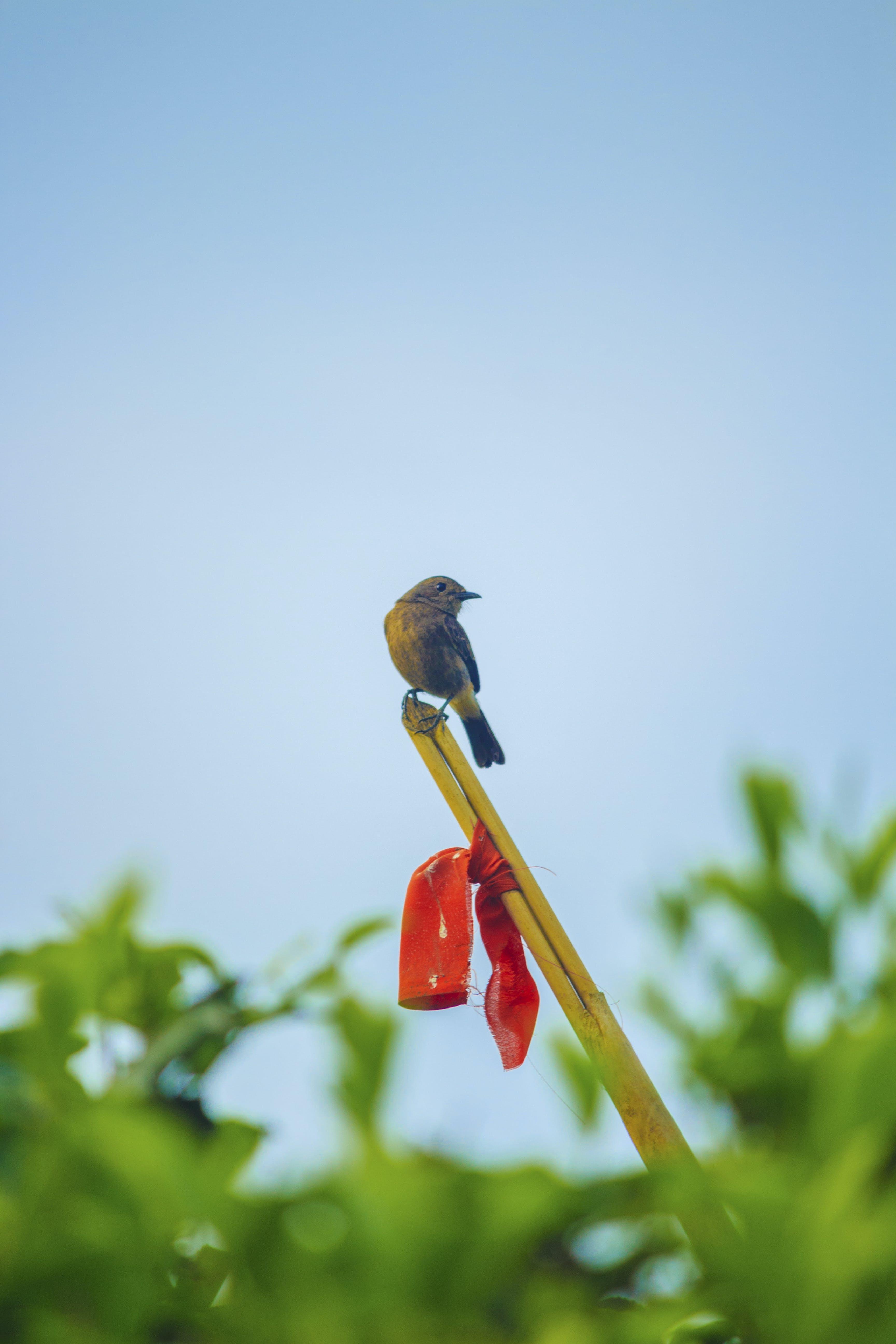 Free stock photo of #bird, green tea, little bird, tiny bird