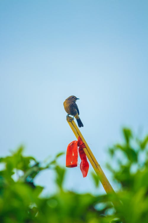 Free stock photo of #bird, green tea, little bird, tiny bird