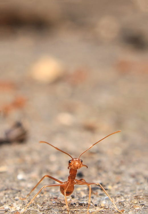 Close-up Photography of Ant