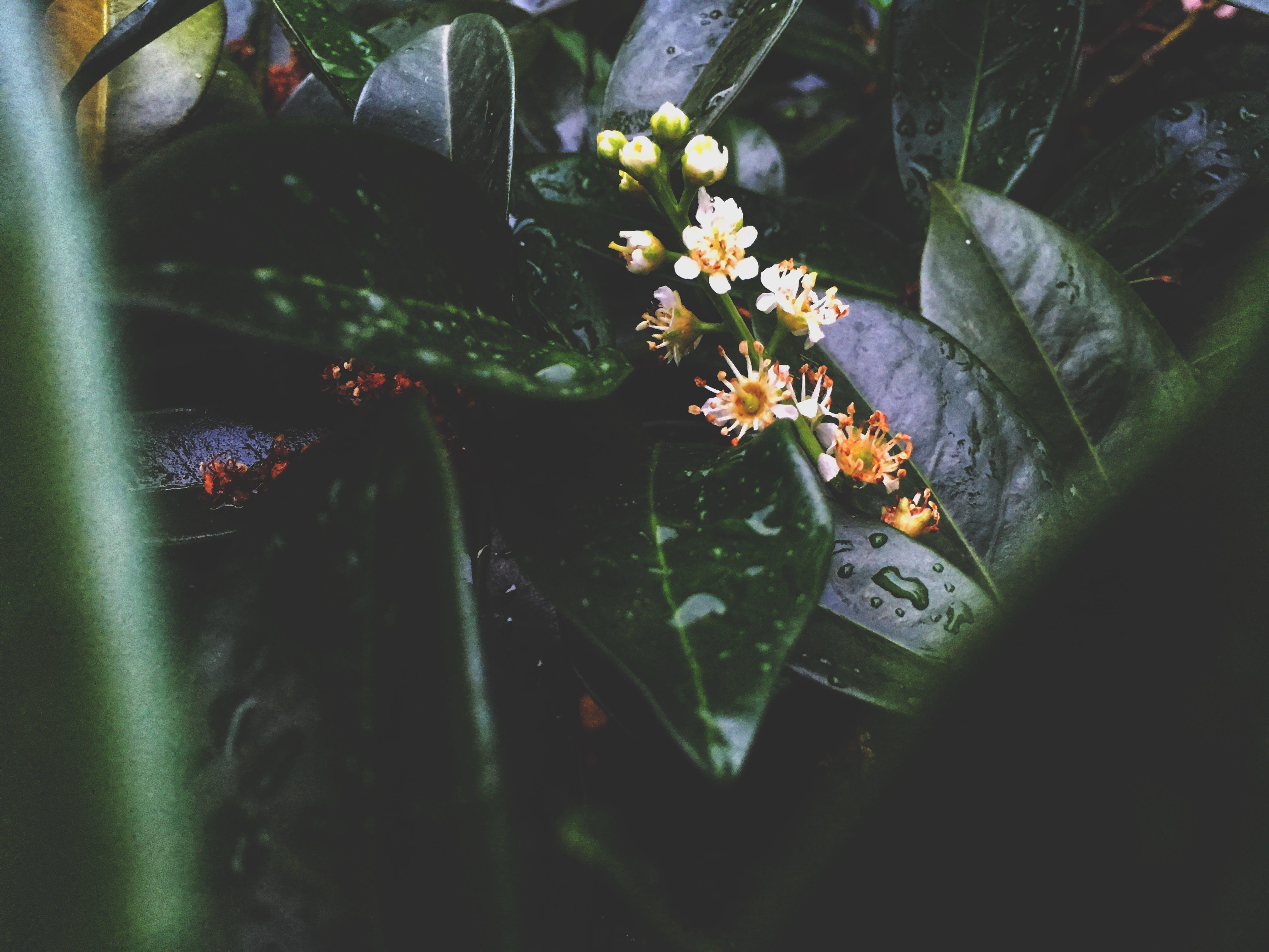 Kostenloses Stock Foto zu blumen, flora, fokus, grazil