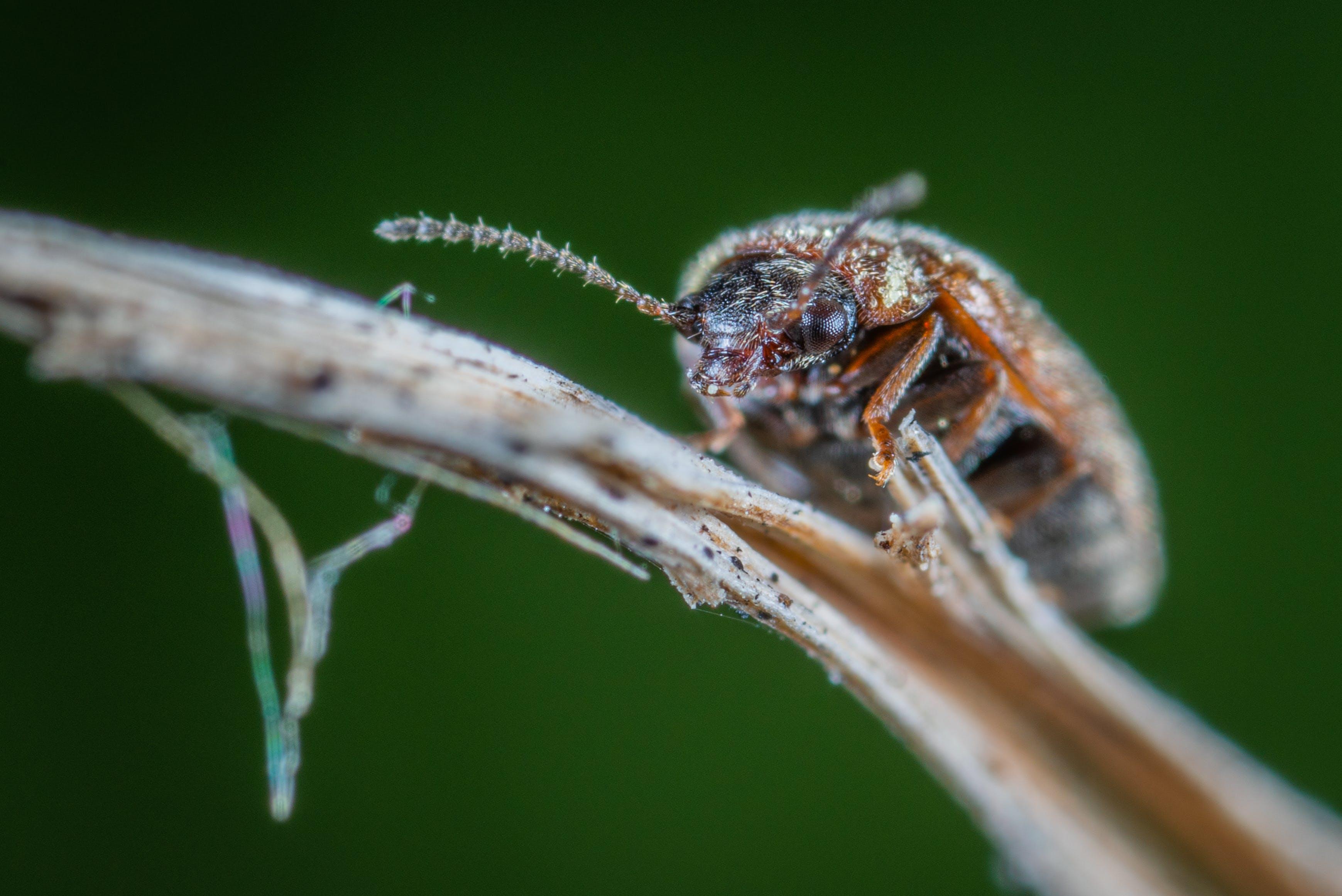 Brown Bug on Brown Plant