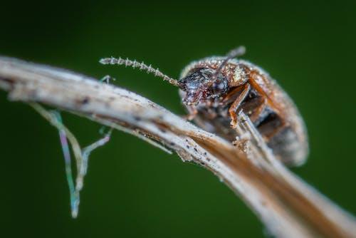 Fotos de stock gratuitas de animal, Beetle, color, concentrarse
