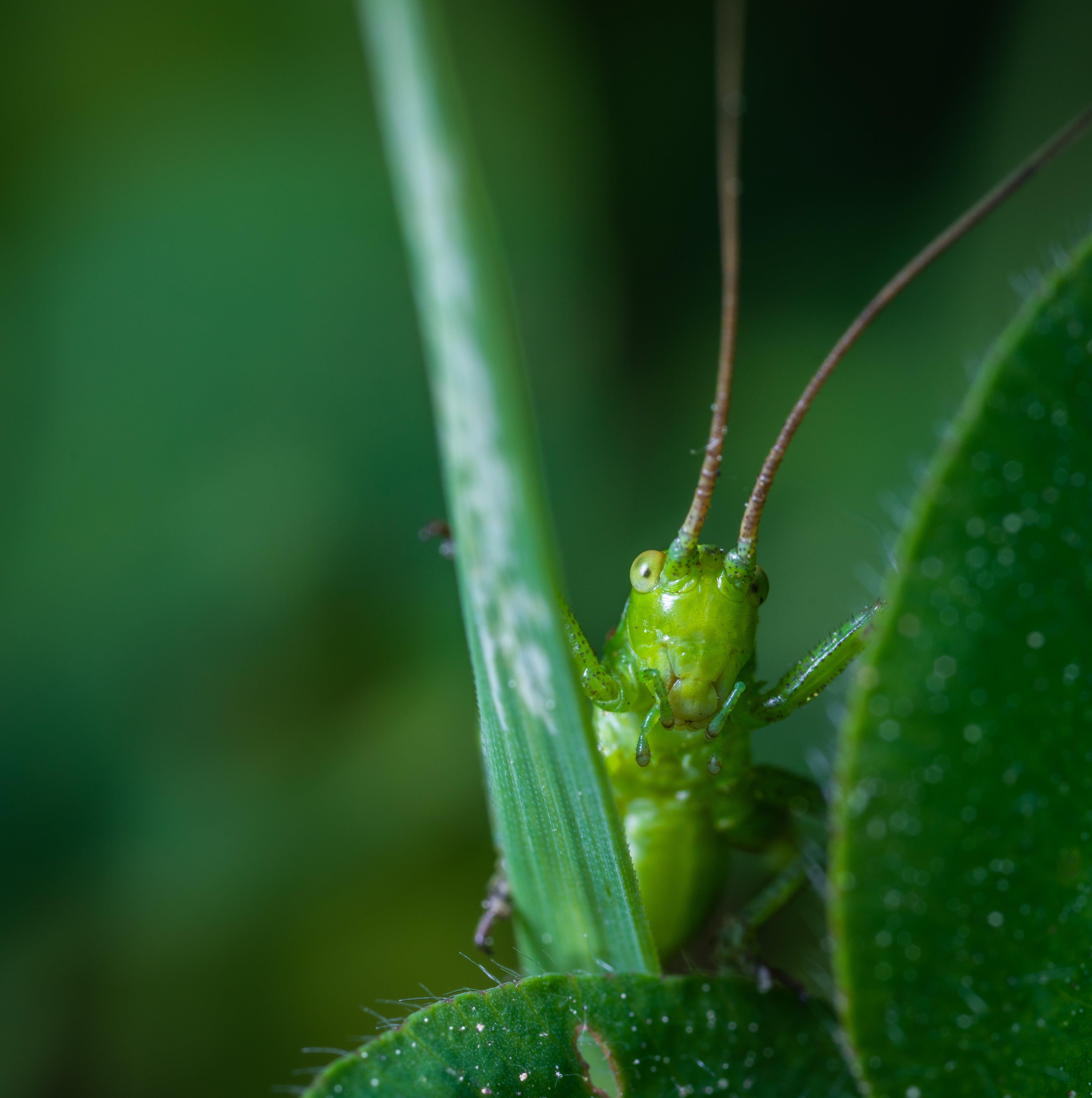 動物, 小, 微距攝影, 昆蟲 的 免费素材照片
