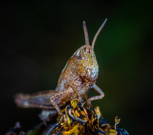 Gratis stockfoto met beest, close-up, dieren in het wild, entomologie