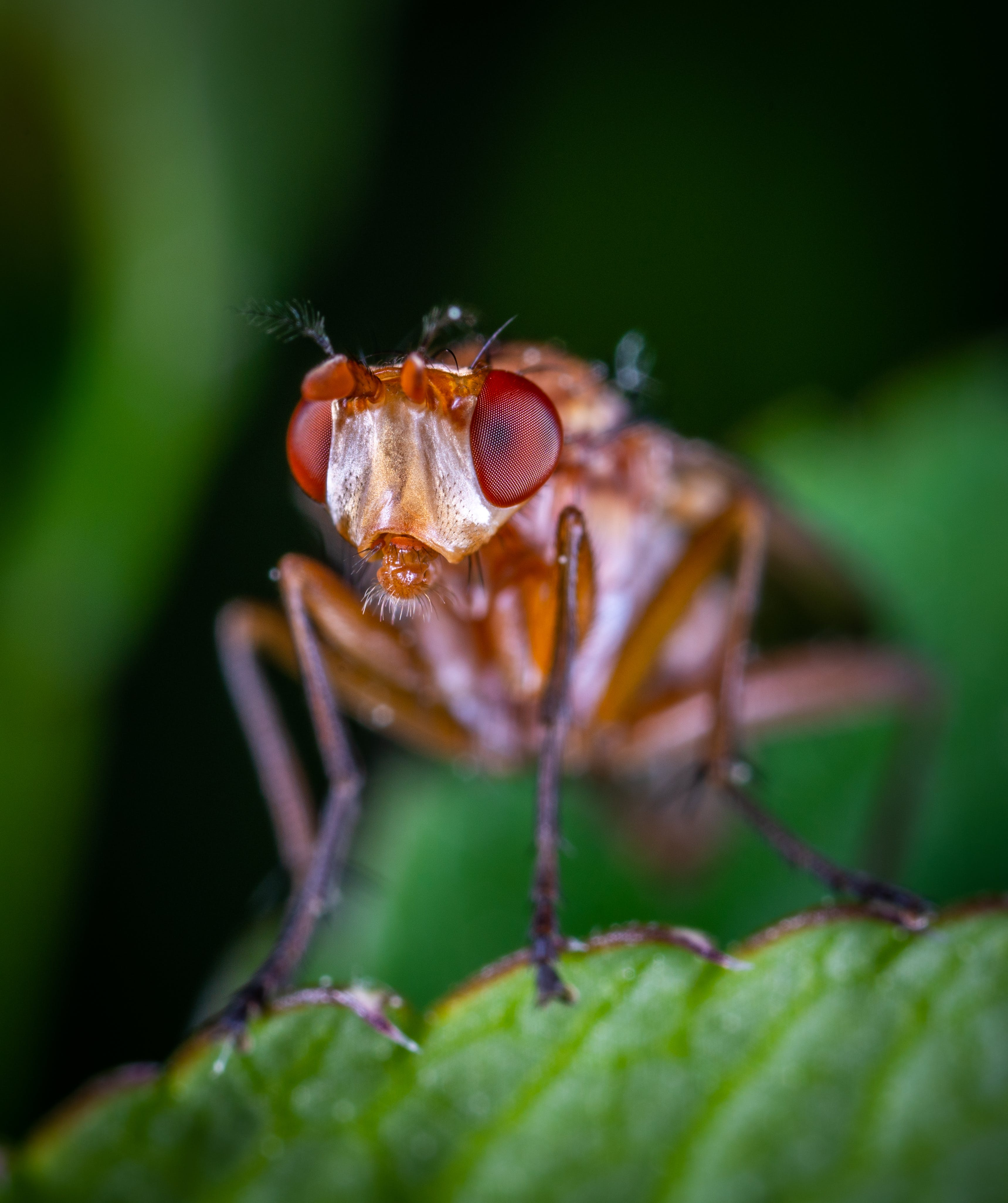Macro Photography of Brown Fly on Green Leaf