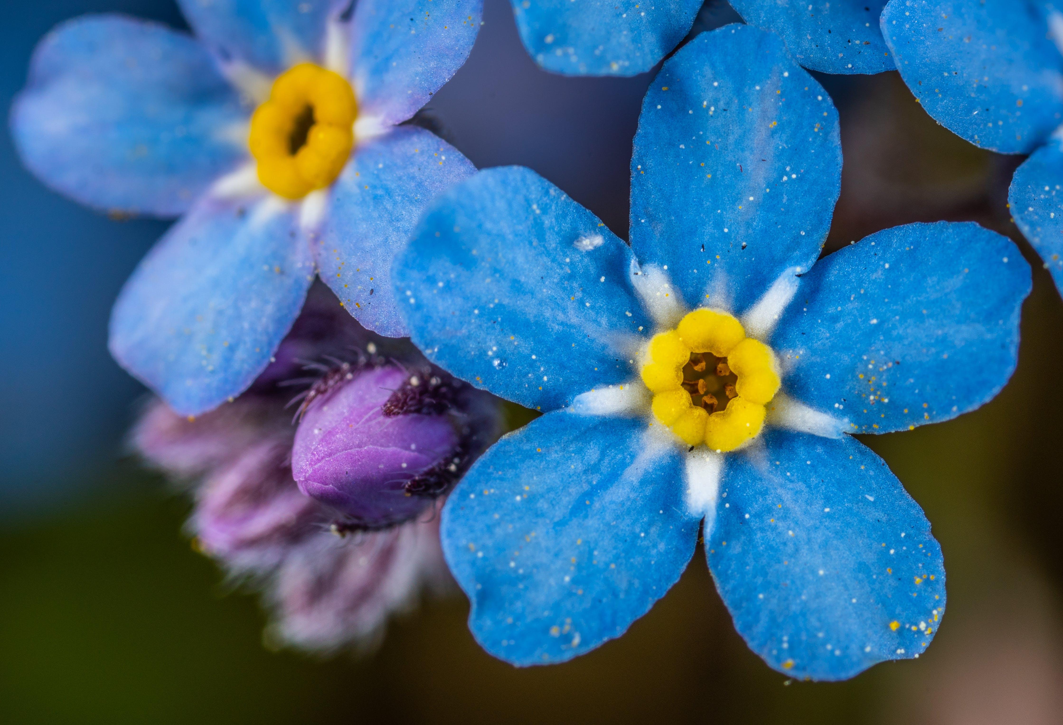Základová fotografie zdarma na téma barva, jasný, krásný, kytka
