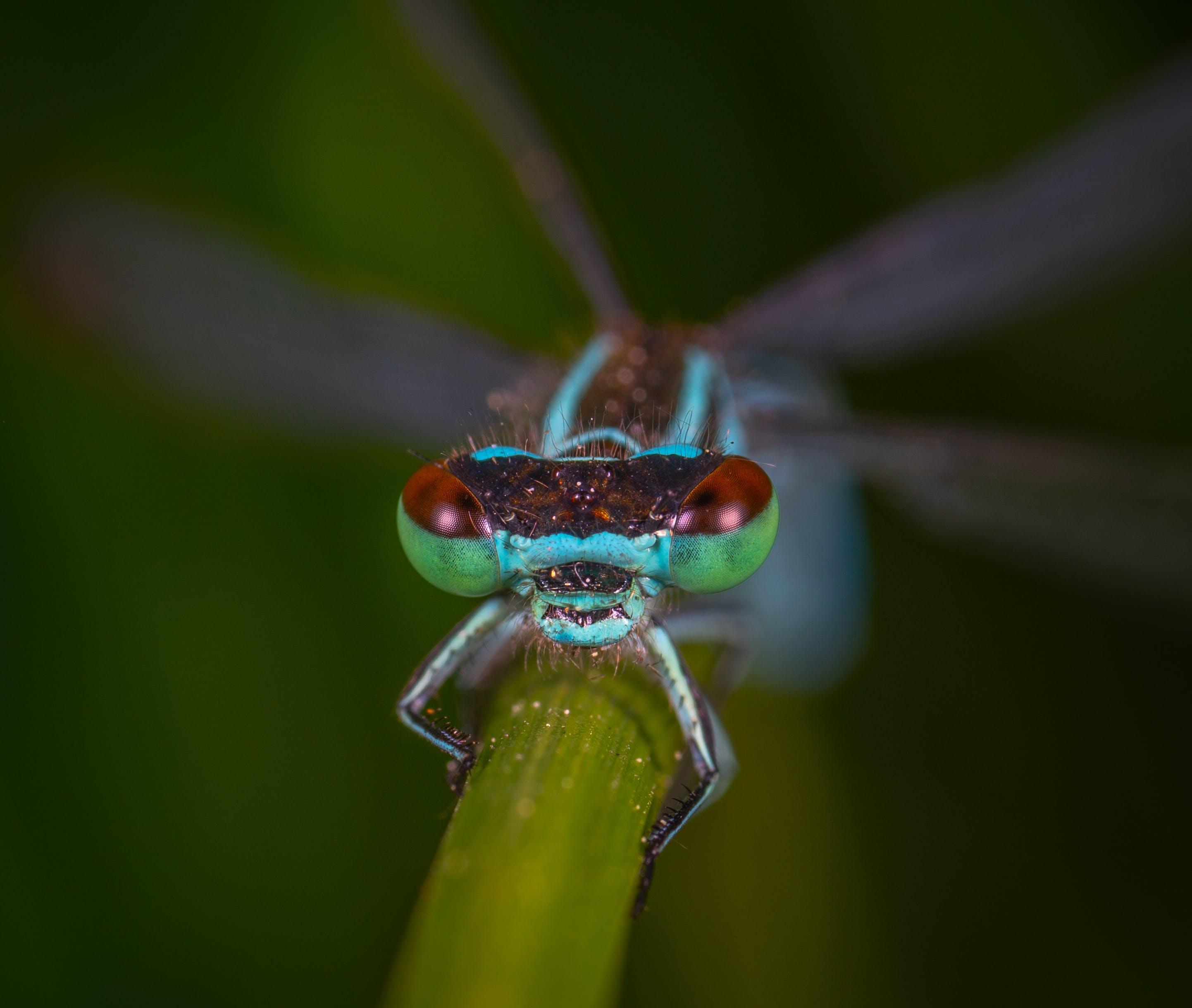 Ảnh lưu trữ miễn phí về chết tiệt, côn trùng, côn trùng học, mắt