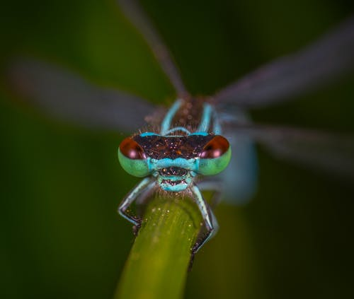 Multicolored Winged Insect