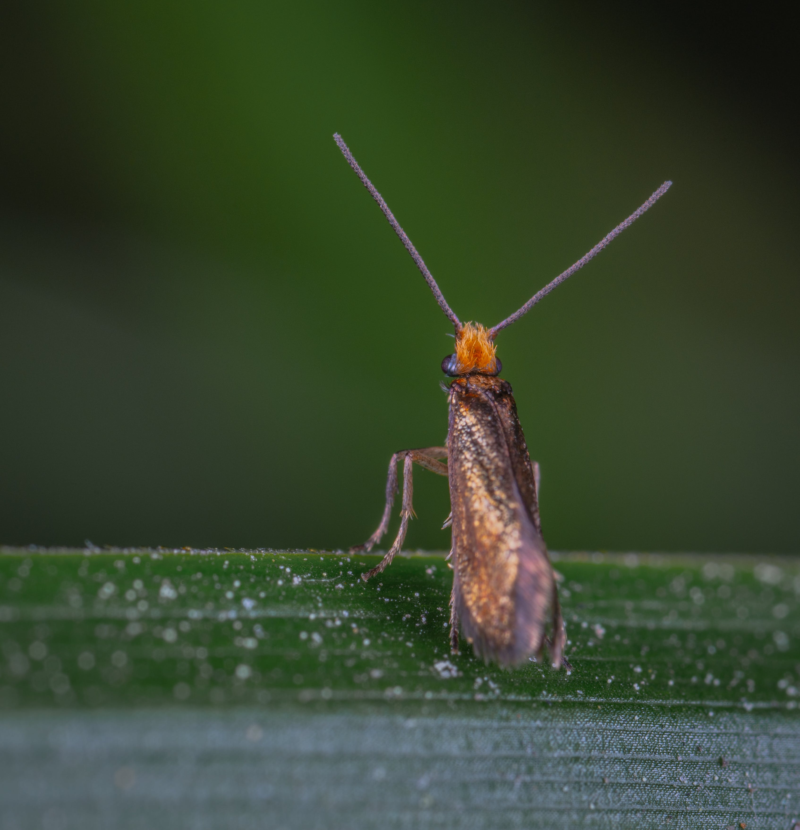 Brown and Orange Insect