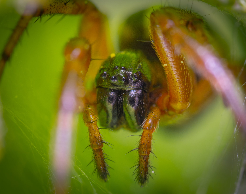 Macro Photography of Lynx Spider