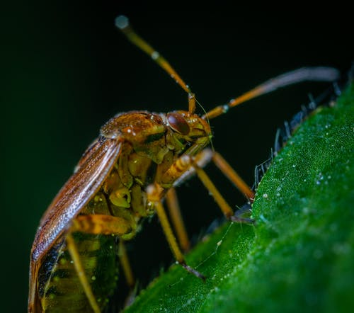 Macro Photography of Brown Beetle on Green Leaf