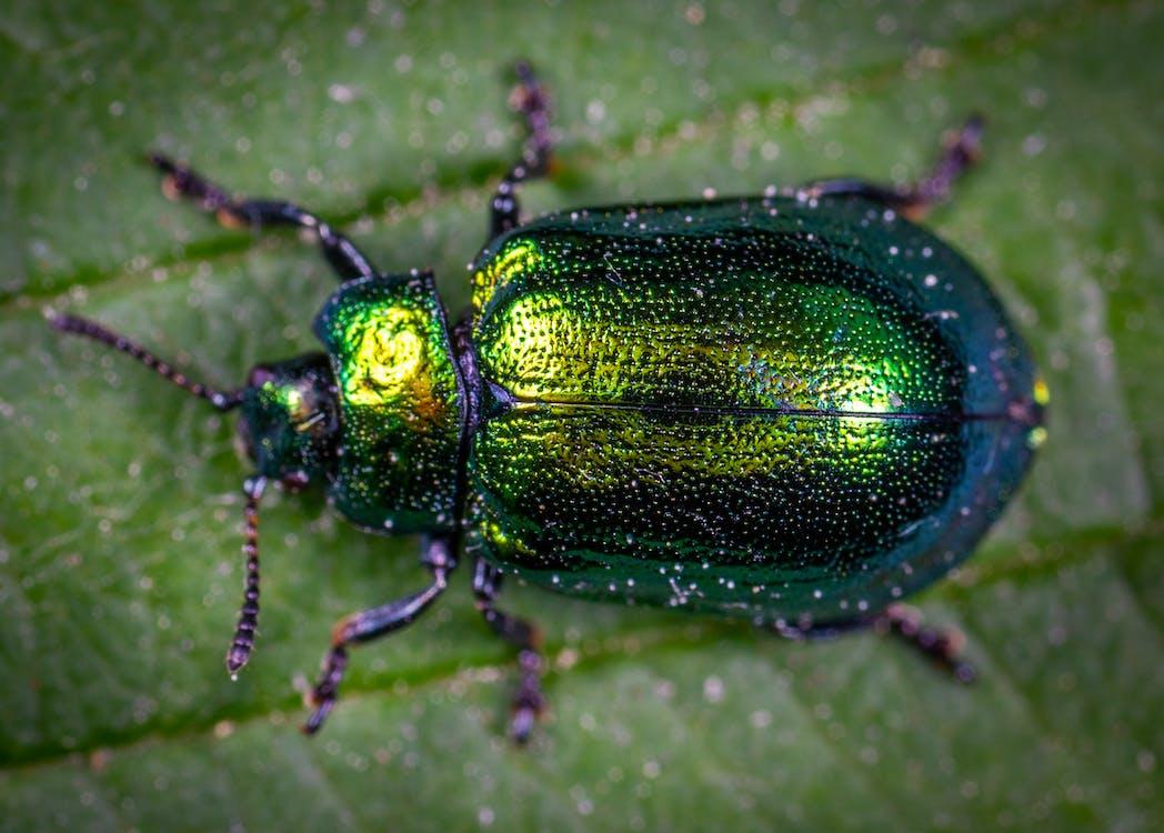 Beetle, Безхребетні, біологія