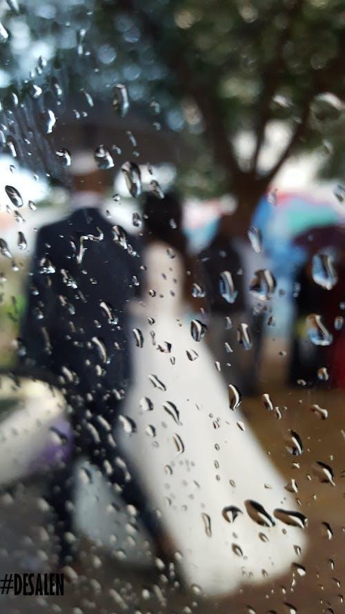 Ingyenes stockfotó esküvő, eső, esős nap, homály témában