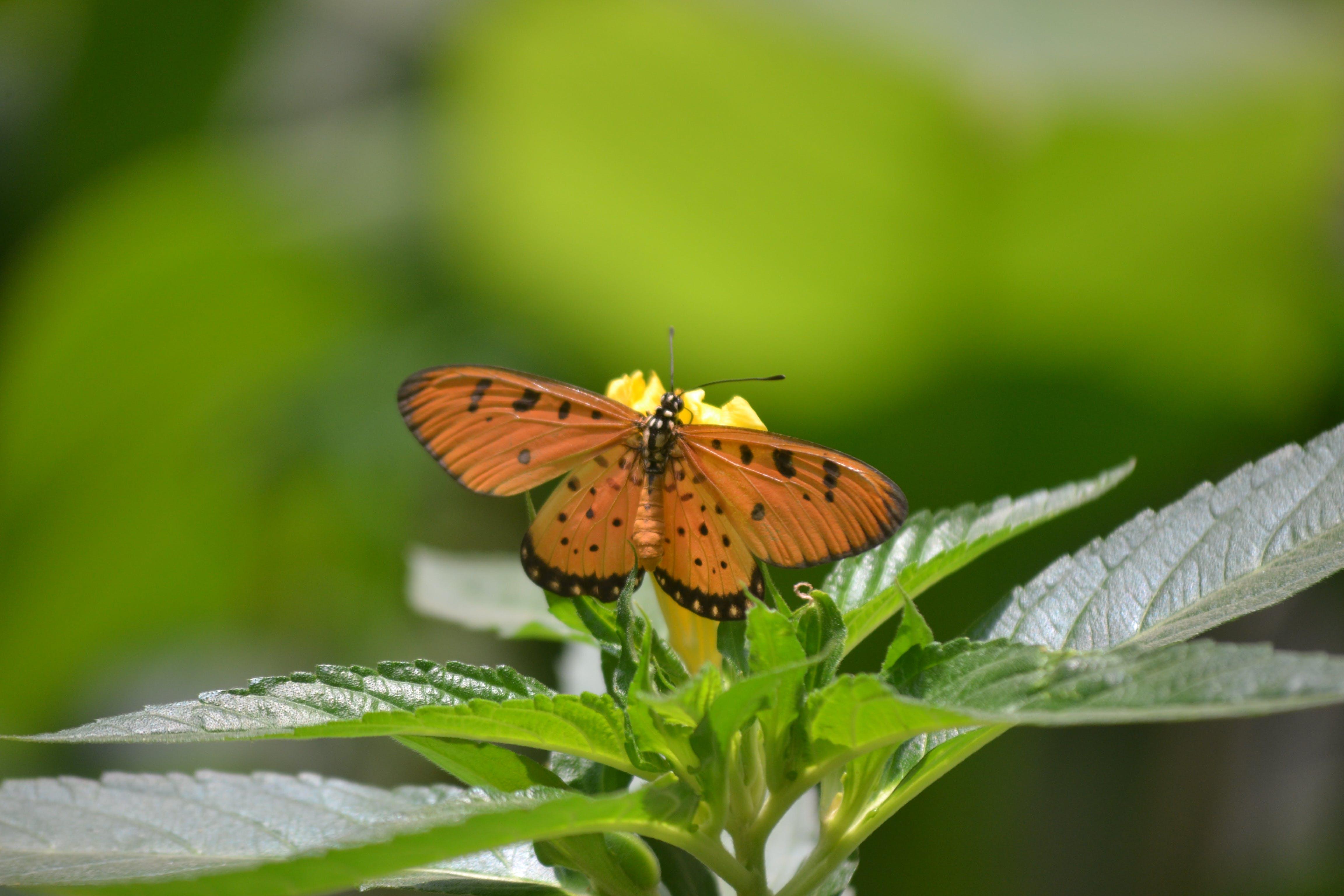 Free stock photo of Adobe Photoshop, butterfly on a flower, nikon camera, sunny day