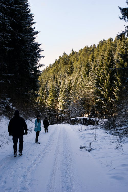Free stock photo of adventure, cold, family, forest