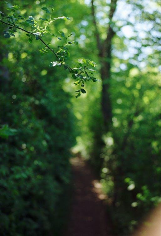 δασικός, δάσος, δέντρο