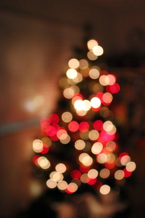 Δωρεάν στοκ φωτογραφιών με χριστουγεννιάτικο δέντρο