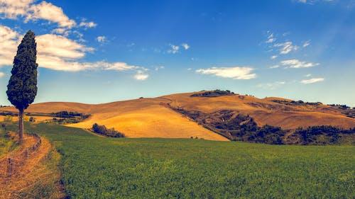 Grama Verde E Montanha Sob O Céu Azul