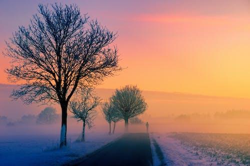 Základová fotografie zdarma na téma počasí, rozbřesk, rýma, silnice