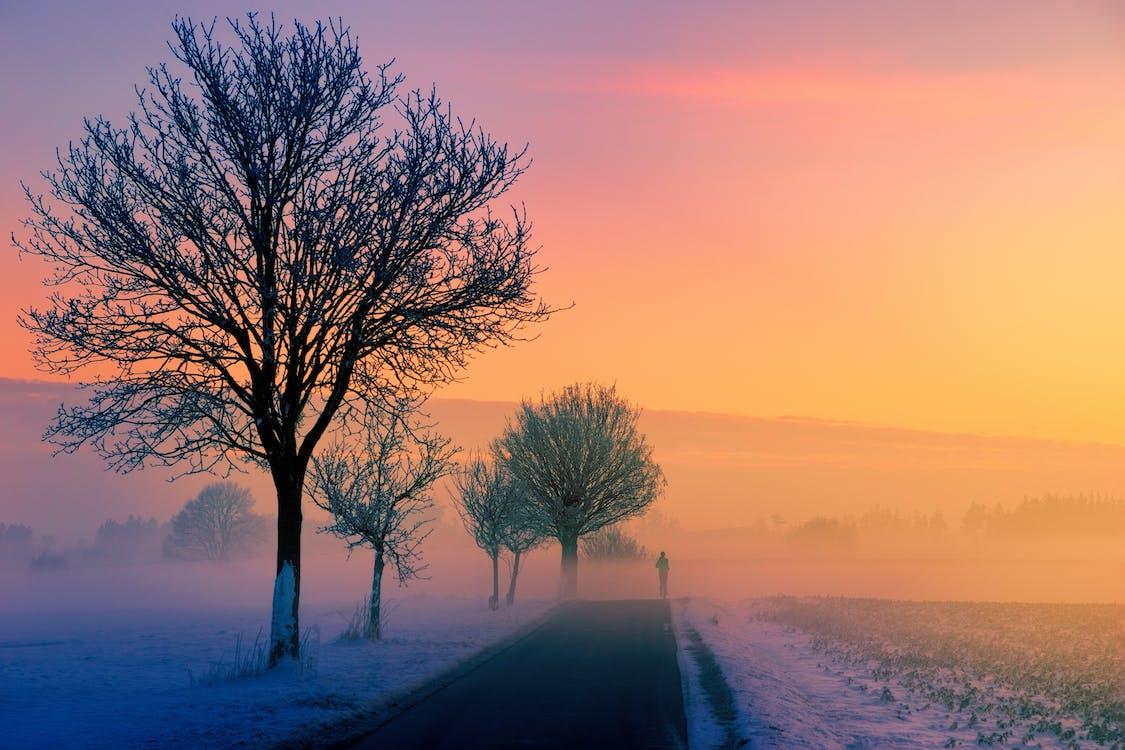 дерево, дорога, погода
