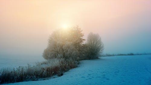 冷, 凍結的, 戶外, 有霧 的 免费素材照片