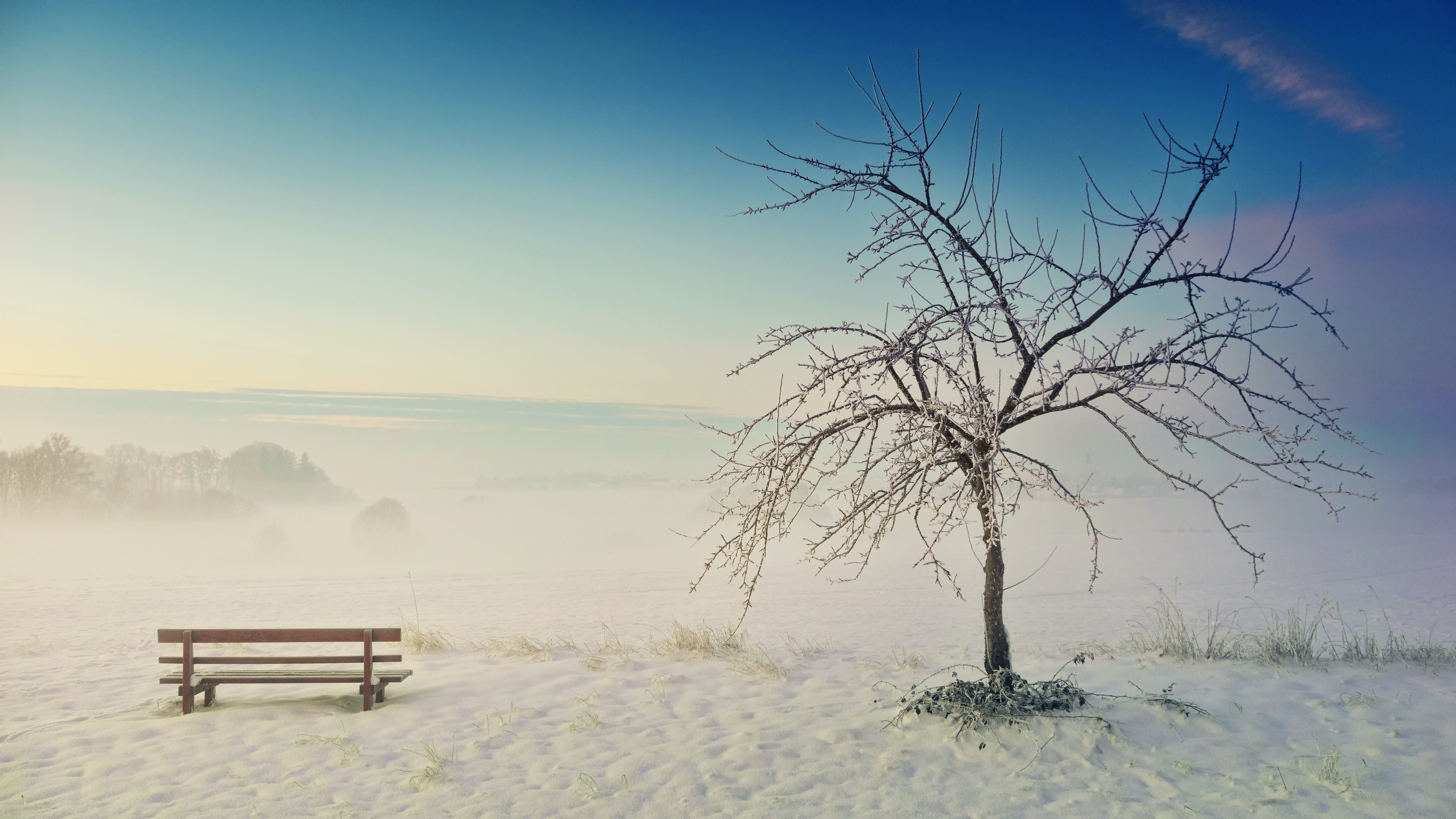 Photo of Withered Tree Near Bench on Snow