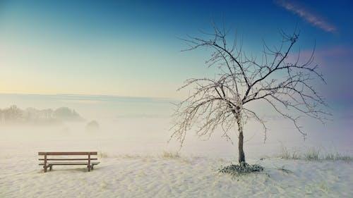 原本, 戶外, 有霧, 樹 的 免费素材照片
