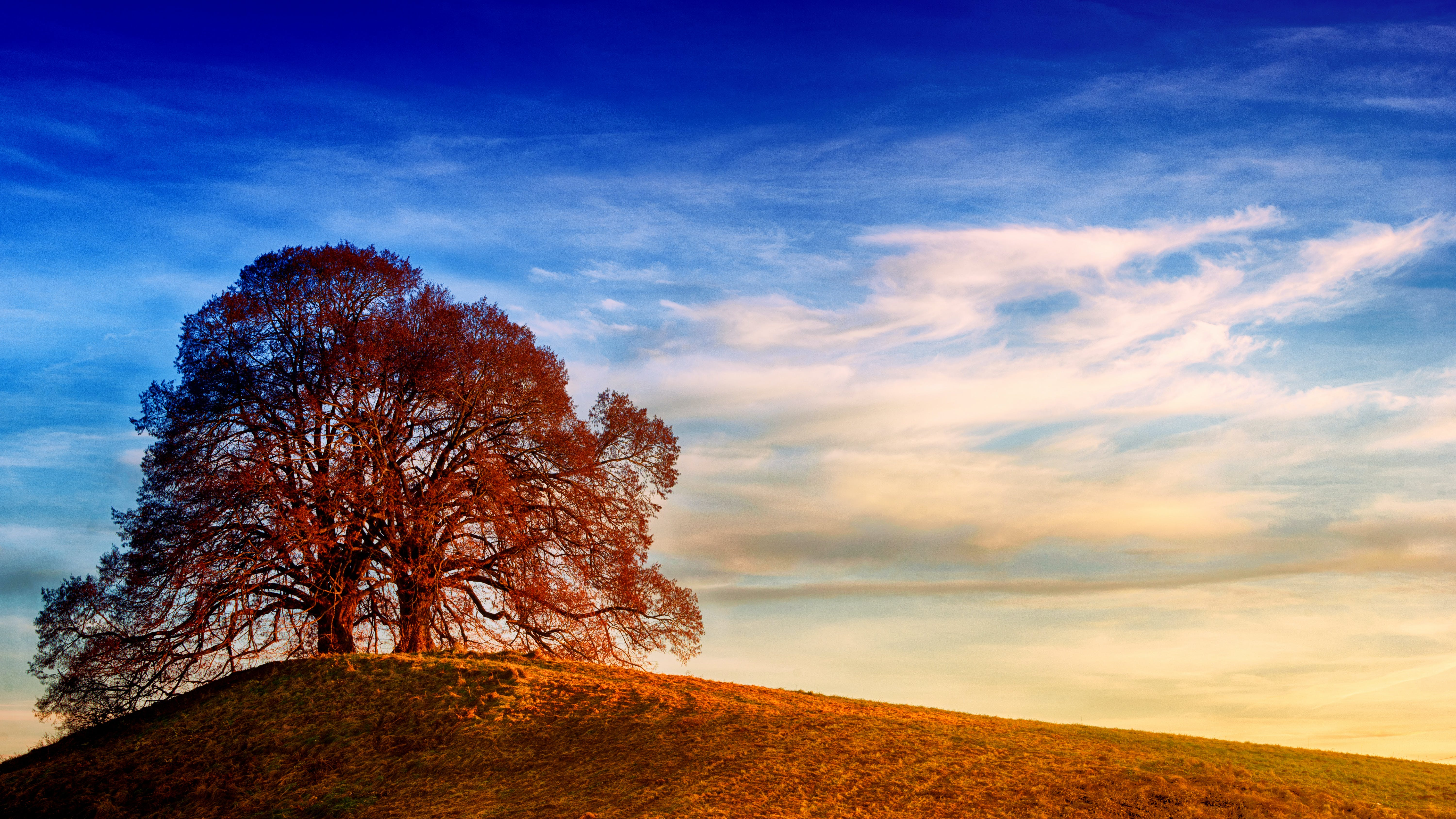 Tree on Top of Hill Under Blue Sky