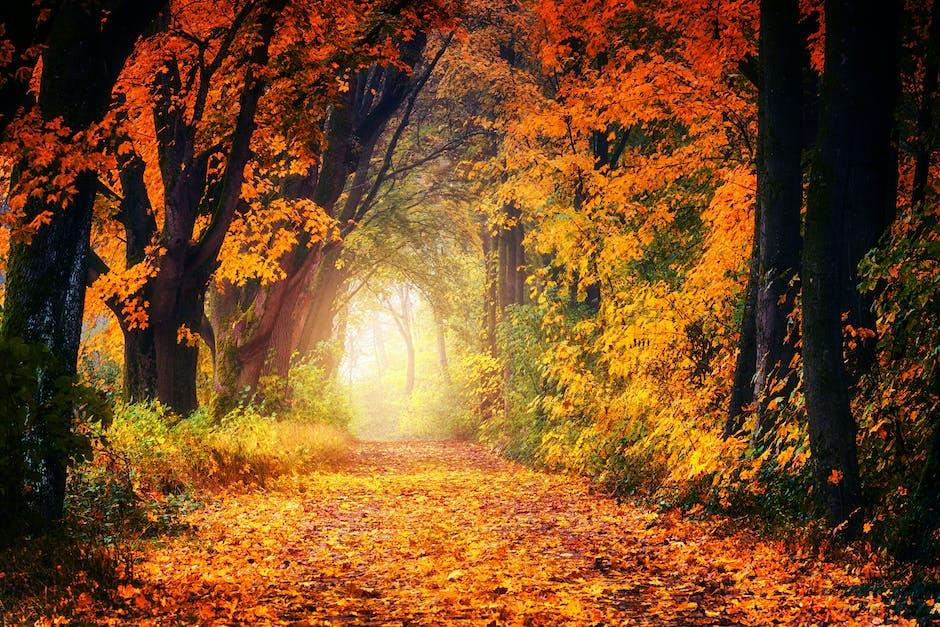 Photography of Maple Trees - Great Little Breaks
