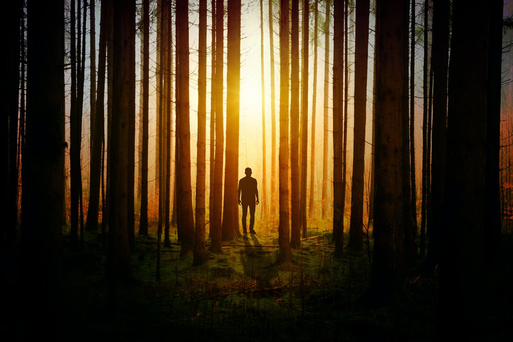 Man in the woods during sunset.   Photo: Pexels