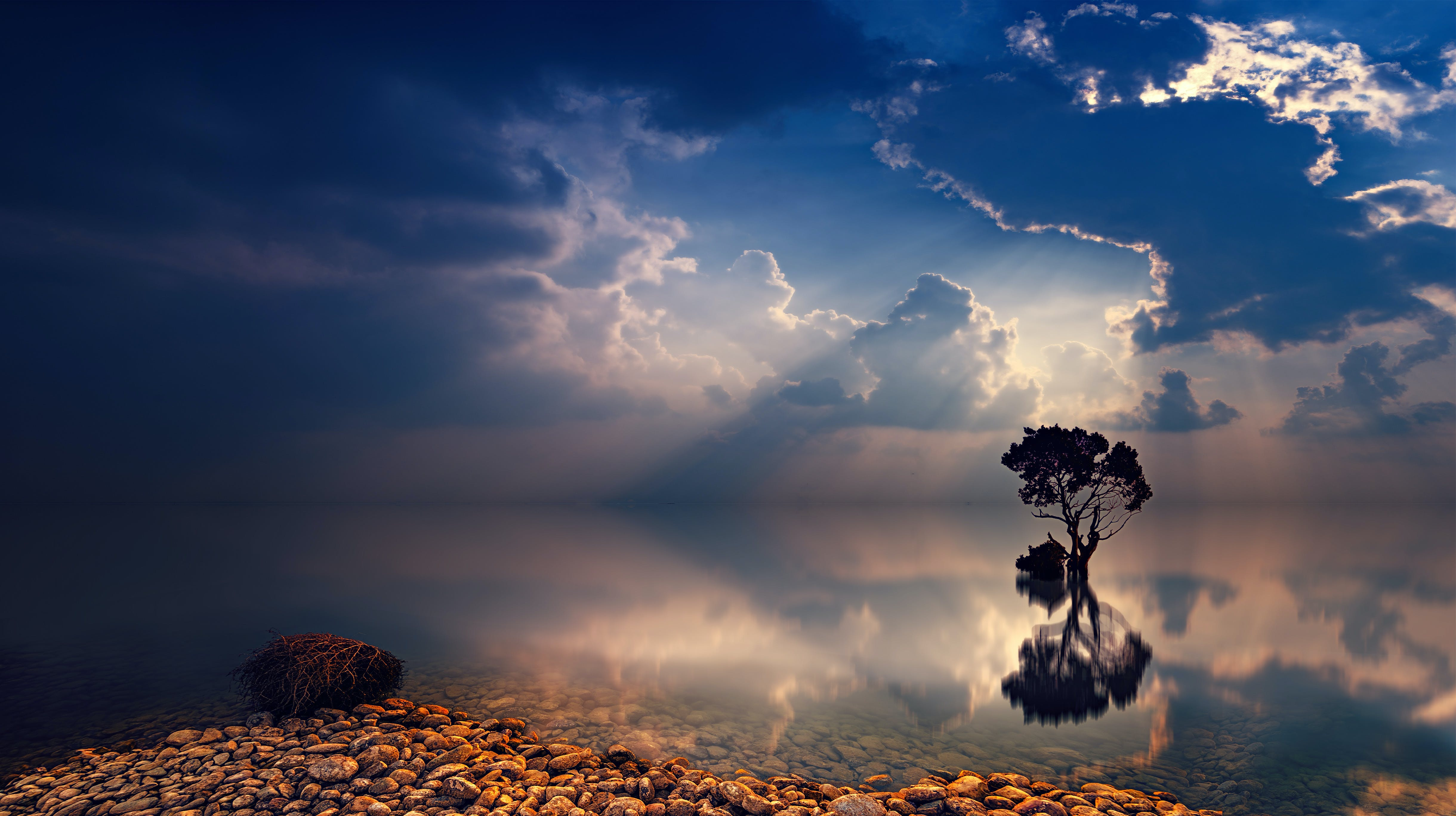 Reflecting Photo of Trees and Body of Water