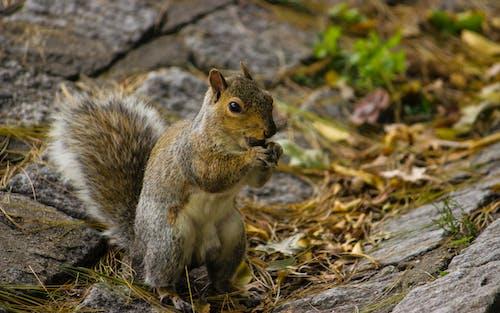 Fotos de stock gratuitas de animal, árbol, ardilla, césped