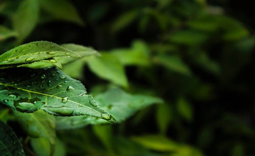 Macro Photography of Water Dew on Green Leaf Plant