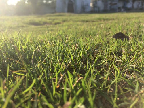 คลังภาพถ่ายฟรี ของ หญ้า