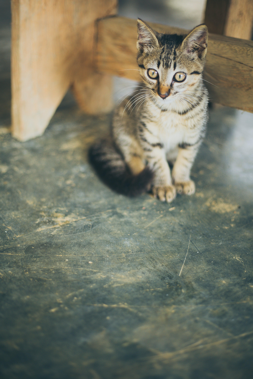 Brown Tabby Kitten Beside Wooden Frame