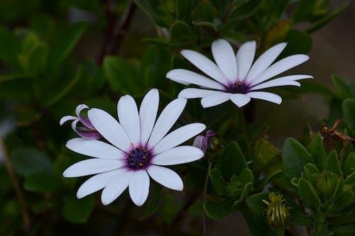 꽃, 꽃잎, 식물군, 자연의 무료 스톡 사진