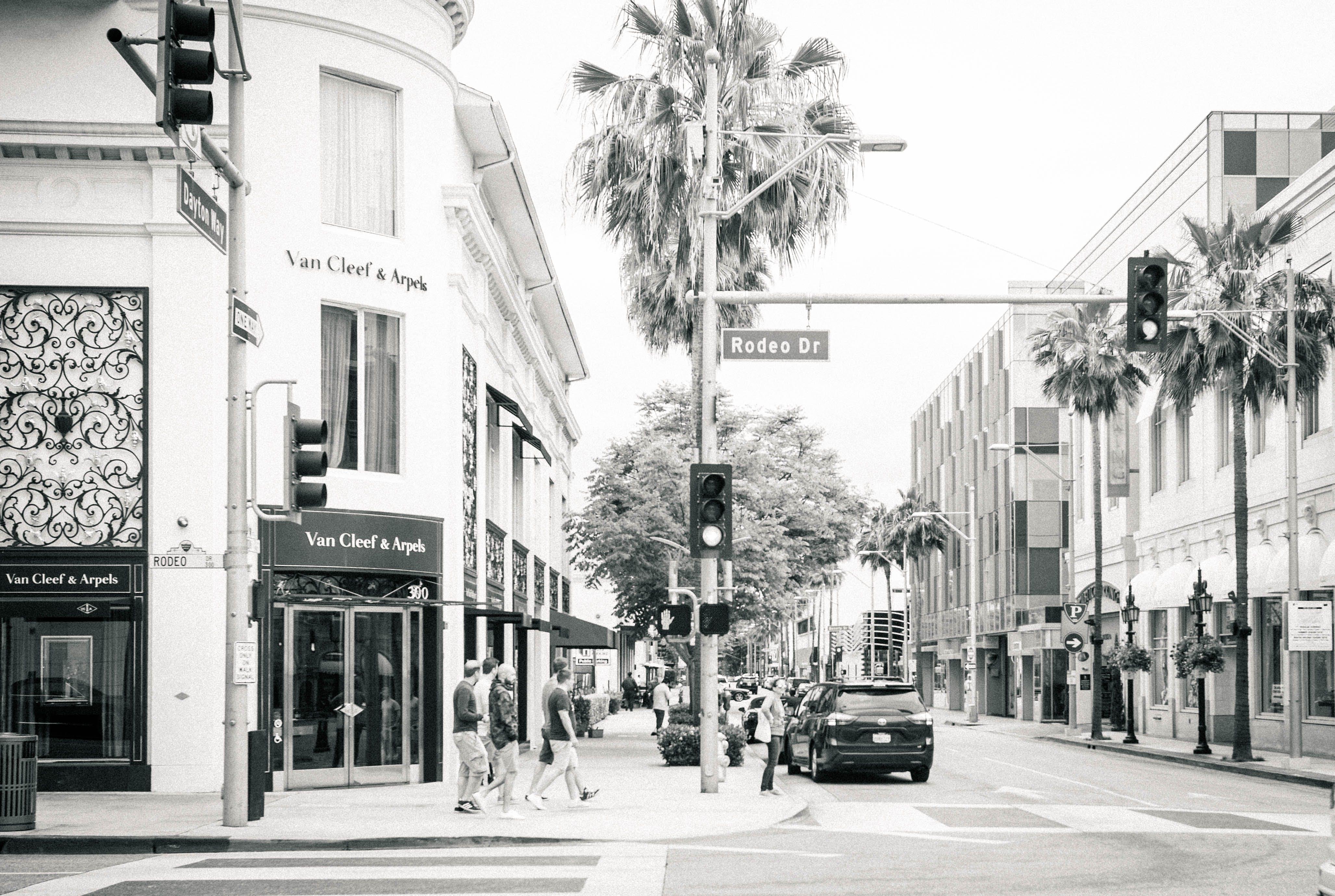 black and white, palm trees, street corner