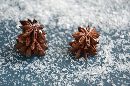 アニス, クリスマス, フレグランス, 休日の無料の写真素材