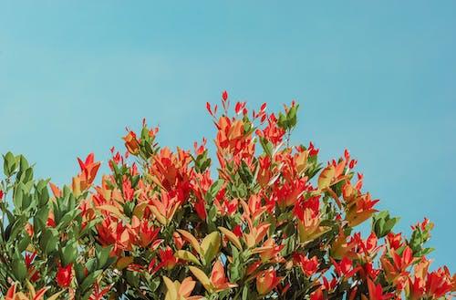 빨간색과 노란색 꽃