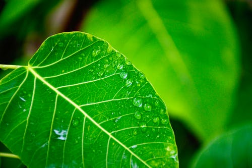 Selective Focus Photography of Water Drop on Green Leaf