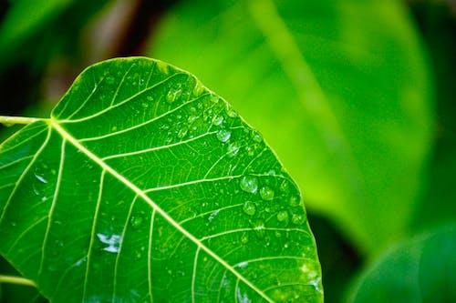 Безкоштовне стокове фото на тему «зелений, краплі води, лист, листя»