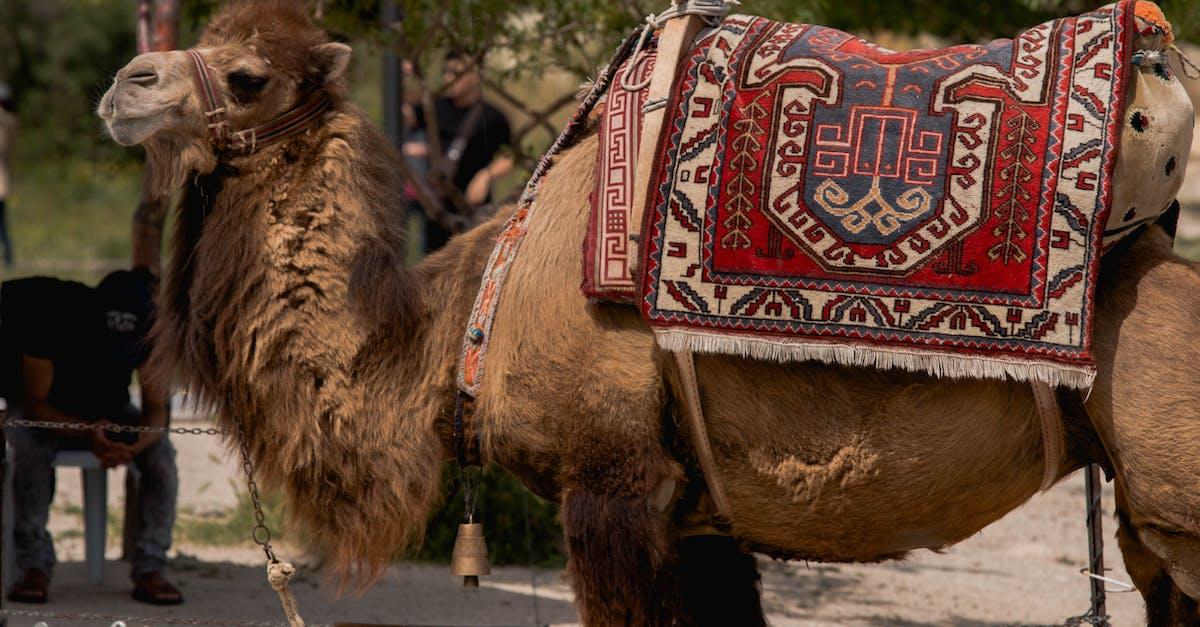 Поздравления, открытка верблюд