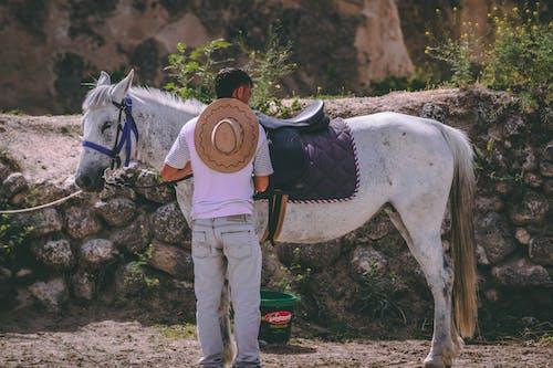 Kostenloses Stock Foto zu pferd, reiten, reiter