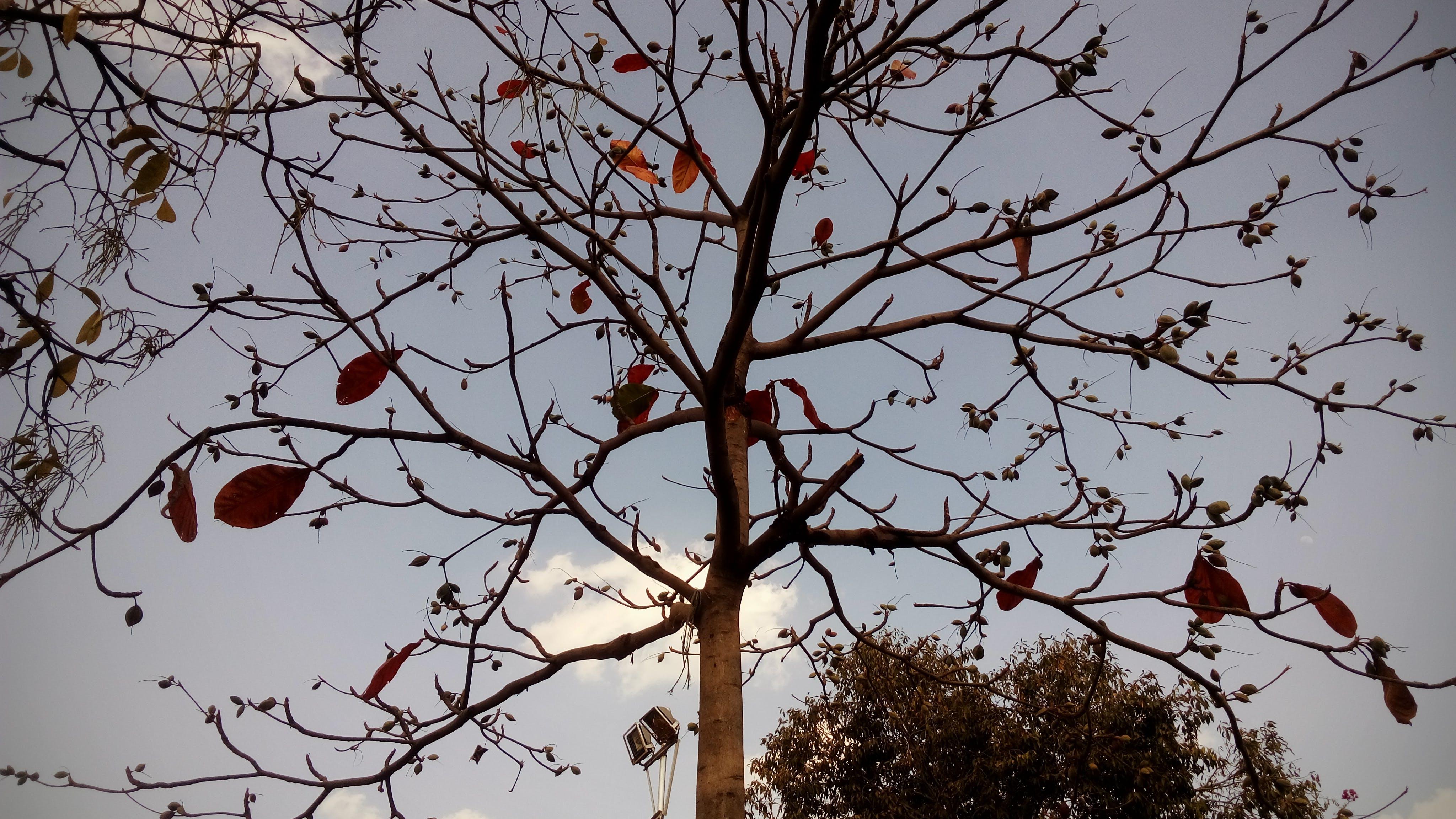 Free stock photo of #Tree