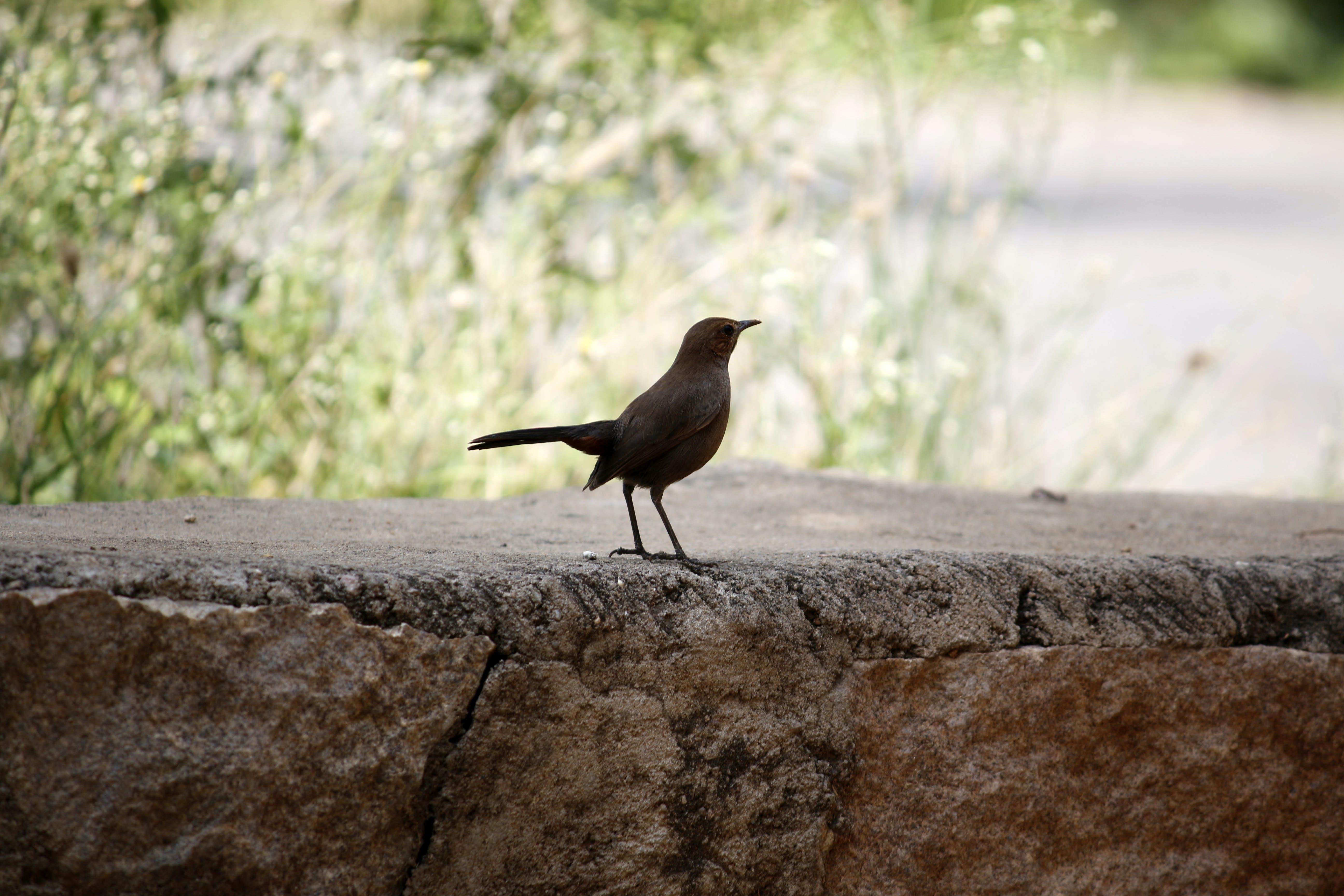 Black Bird on Stone Surface